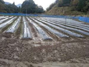 蒲生農場_そら豆