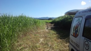 8月3日敷き草刈り場