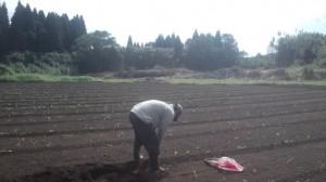 新圃場ほうれん草予定地の除草