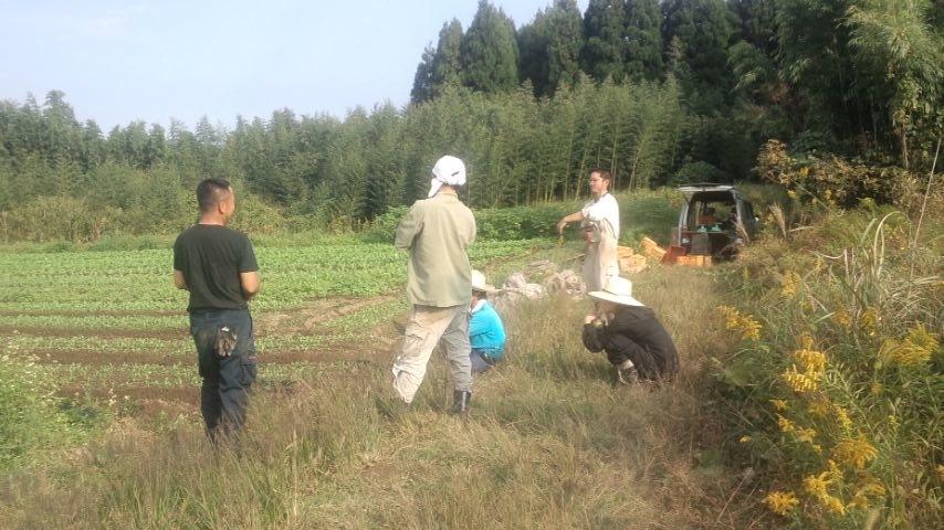 10月31日ほうれん草収穫小休止