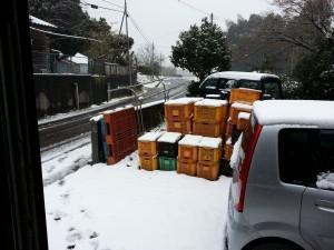 大口農場_積雪