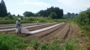大口農場_太陽熱処理