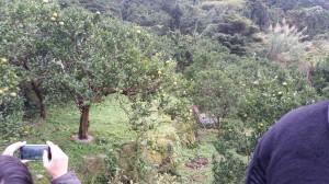 田中果樹園